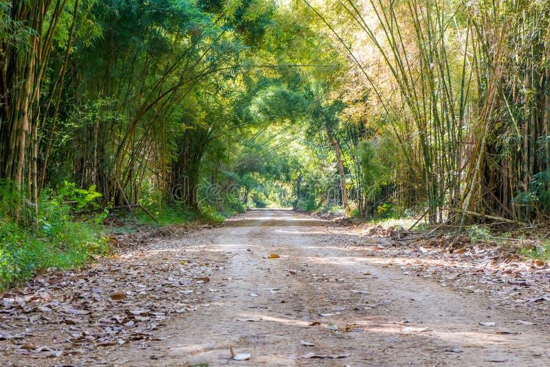Route par le tunnel de la forêt en bambou d'arbre photographie stock libre de droits