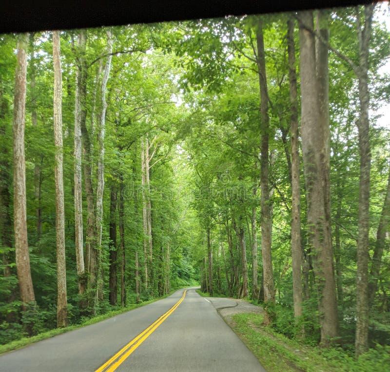 Route par les arbres photos libres de droits