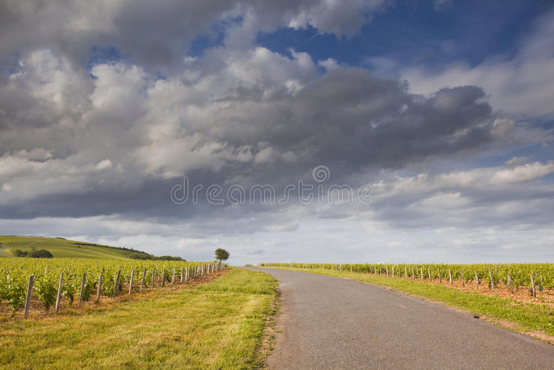 Route par les vignobles photographie stock