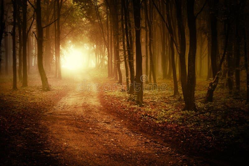 Route par une forêt d'or à l'automne photographie stock
