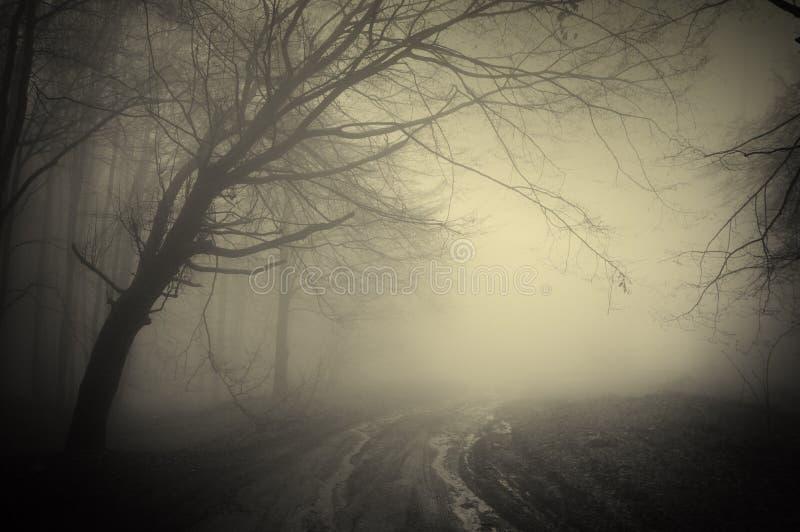 Route par une forêt foncée photo stock
