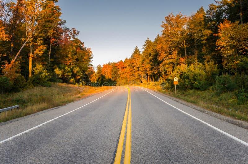 Route par une forêt sous le ciel clair en automne photo libre de droits
