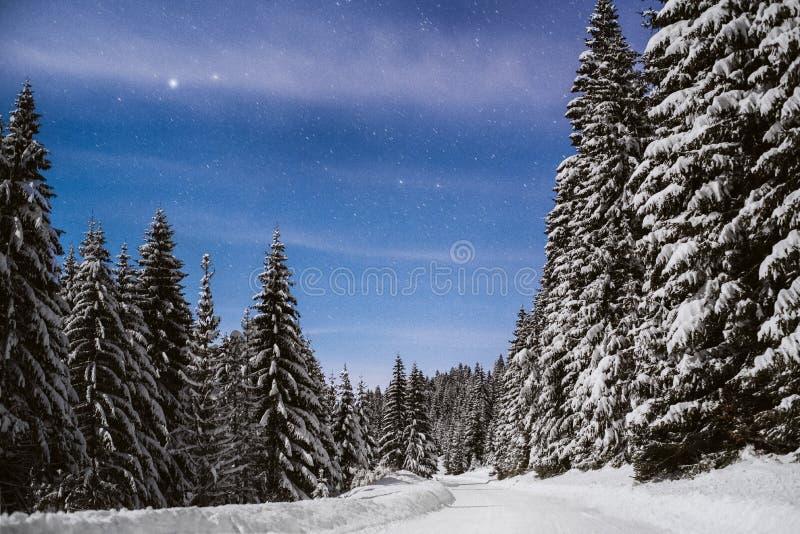 Route par une montagne neigeuse avec des pins photos libres de droits
