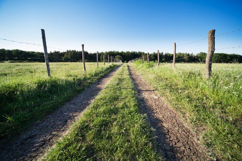 Route parmi l'herbe verte image stock