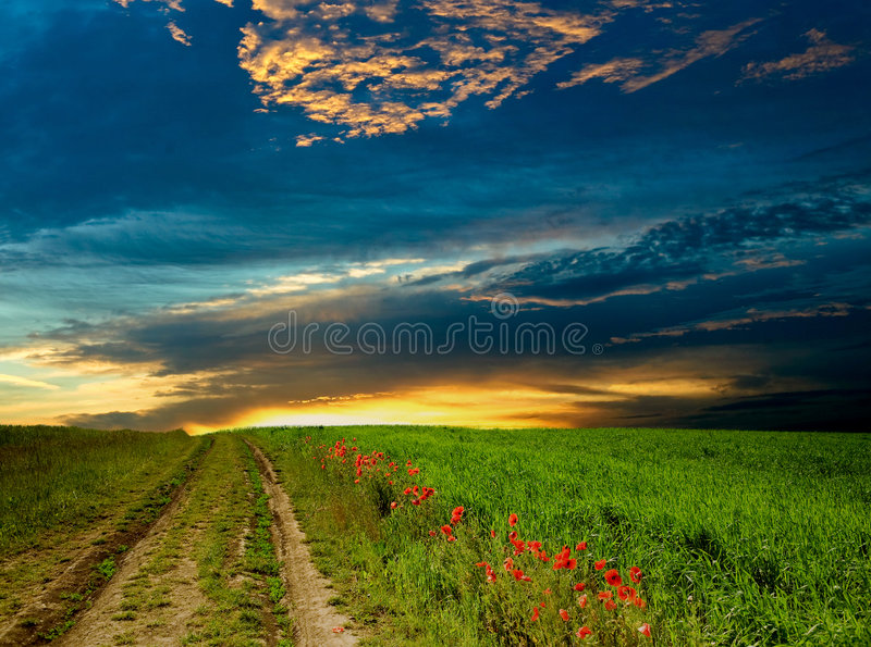 Route parmi la pavot-zone image libre de droits