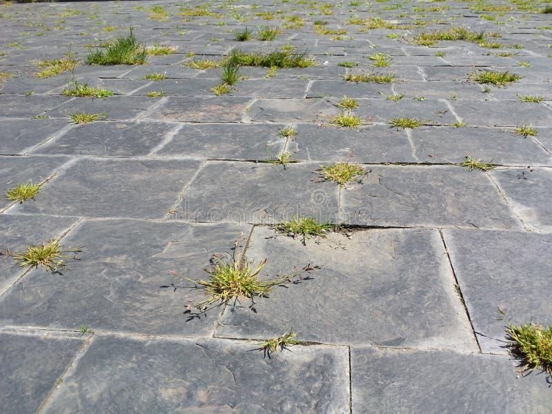Route pierreuse avec l'herbe photo stock