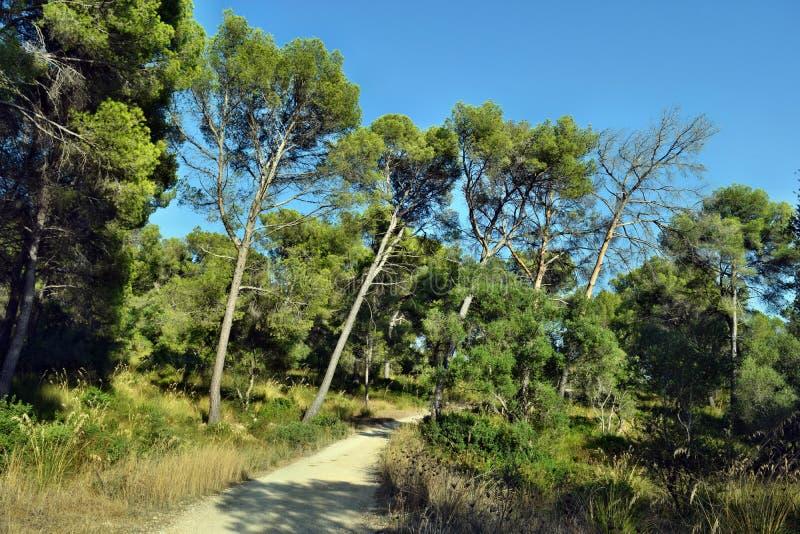 Route, promenade de voie jusqu'au dessus de la montagne Puig de Sant Marti photo stock