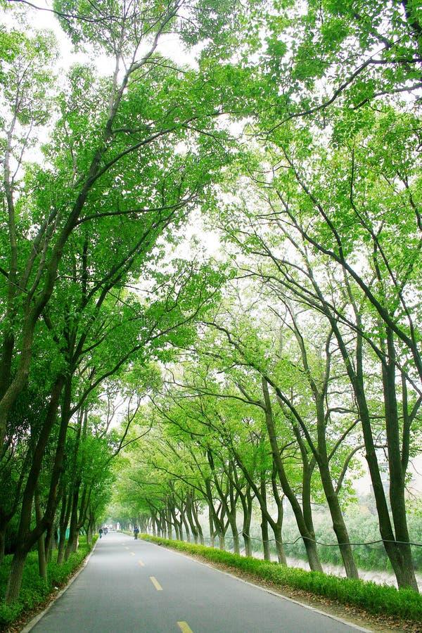 Route rayée par arbre image libre de droits