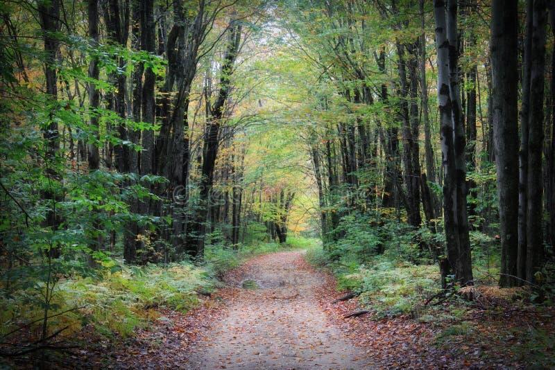 Route rayée par arbre dans l'automne photo libre de droits