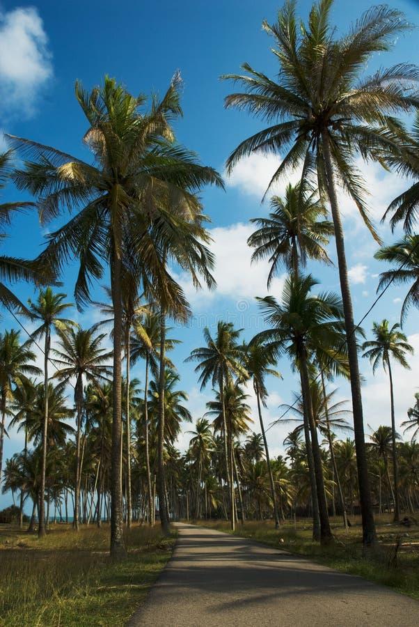 Route reculée parmi des arbres de noix de coco photos stock