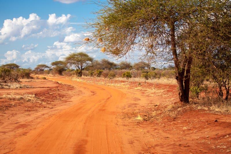 Route rouge dans la savane du Kenya avec un grand arbre, baobab photos libres de droits