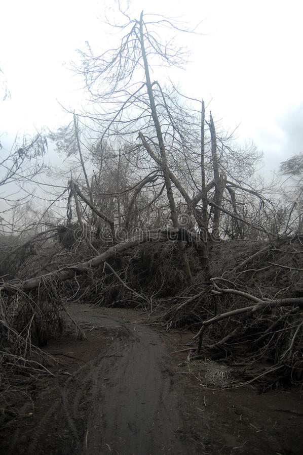 Route ruinée avec des treas morts couverts de cendre vulcanic après Bro photos libres de droits