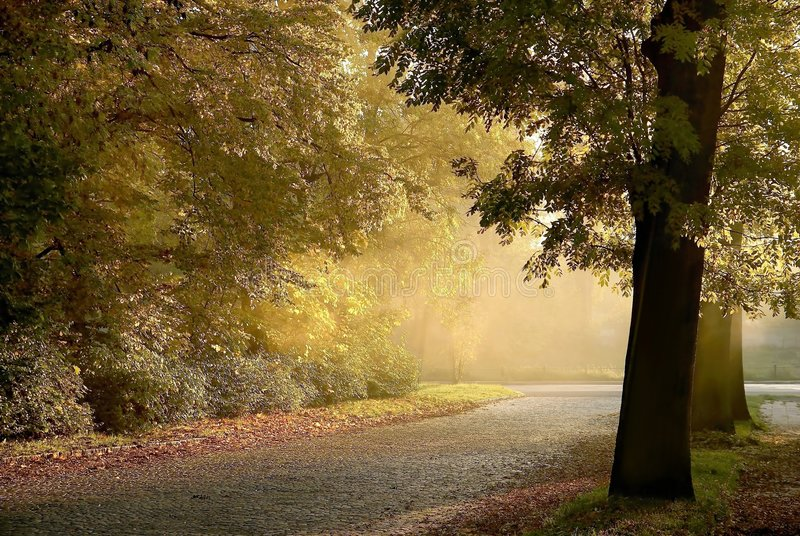 Route rurale brumeuse par des arbres d'automne images libres de droits