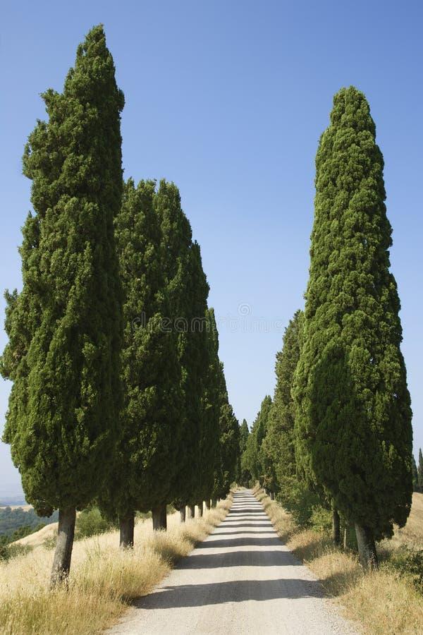 Route rurale délimitée par des arbres image libre de droits