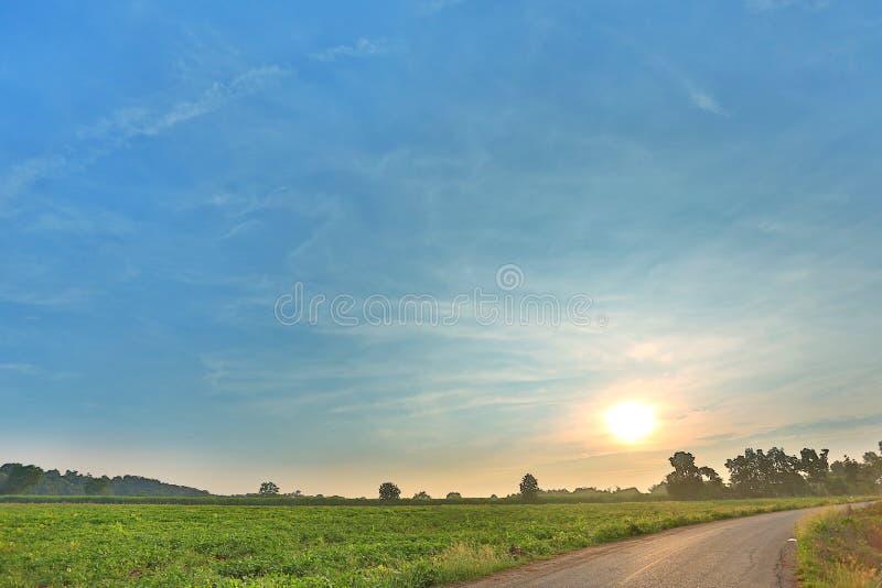 Route rurale d'asphalte avec le champ vert au temps de lever de soleil en Thaïlande photo libre de droits