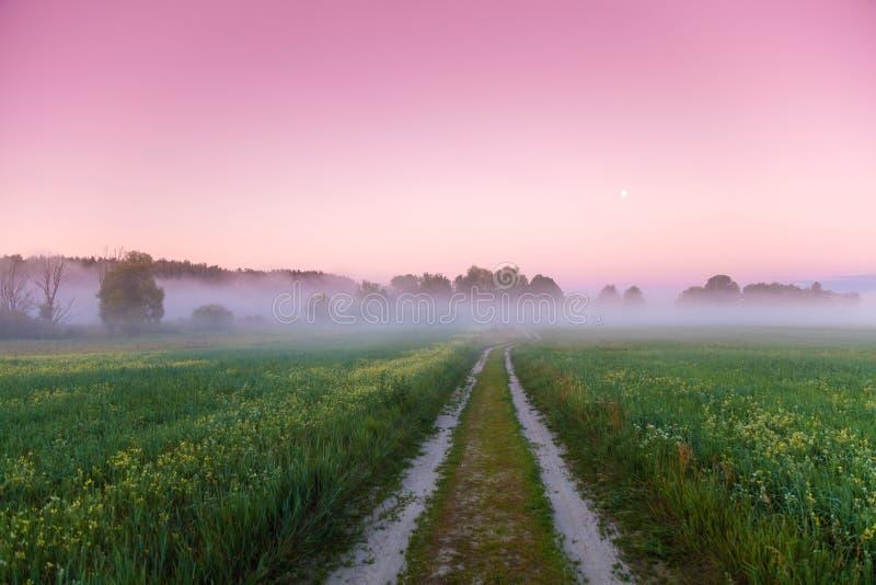 Route rurale dans un domaine à l'aube photos stock