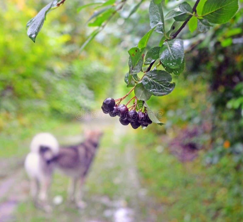 Route rurale sous la pluie dans la chute tôt photo libre de droits