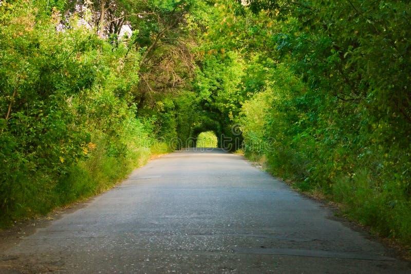 Route sous les arbres verts image stock