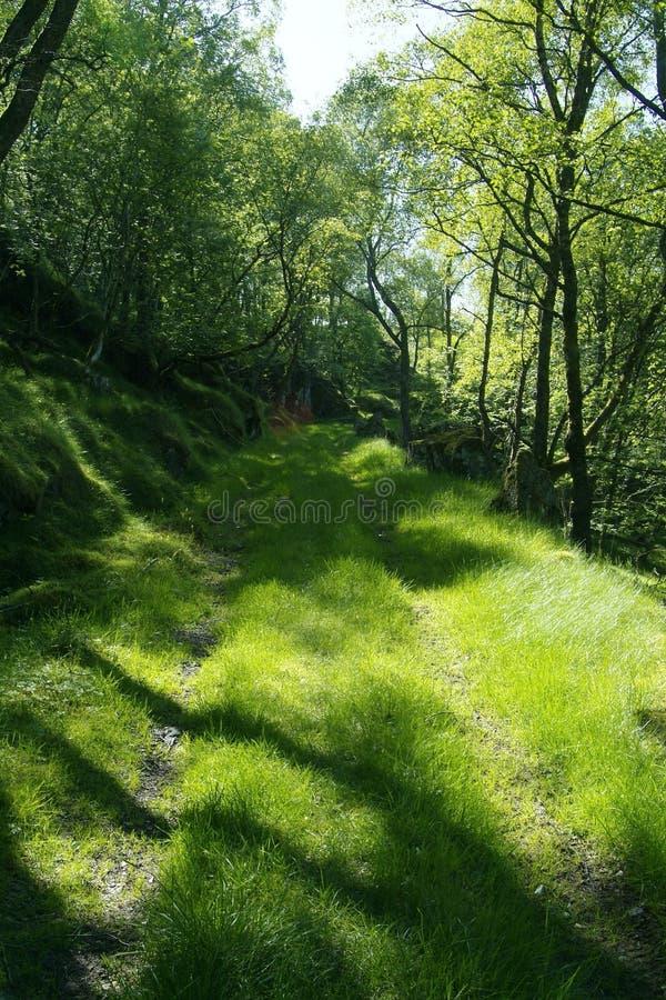 Route verte par la forêt photo stock