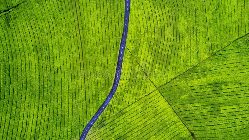 Route vide sur la plantation de thé photographie stock