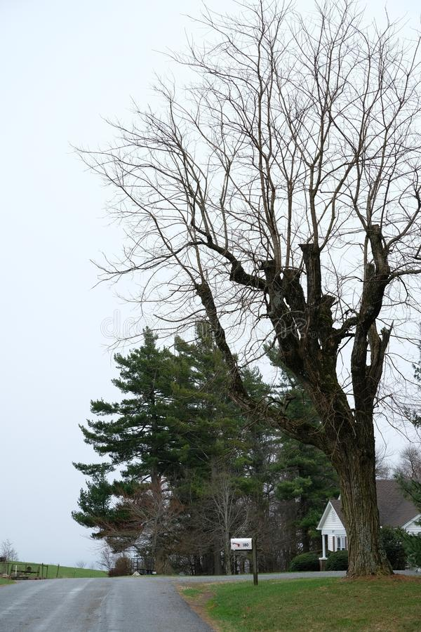 Route voisine hantée d'arbre sec avec le fond de ciel bleu - scène de nature photo stock
