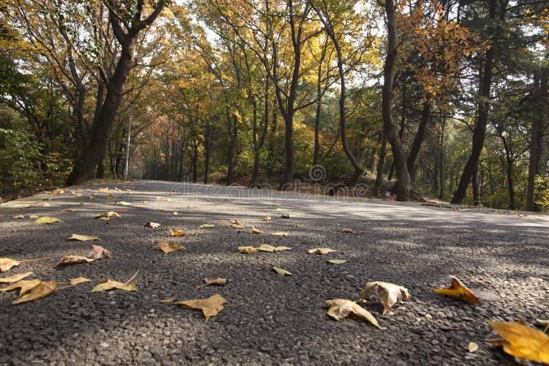Routes de montagne d'automne images libres de droits
