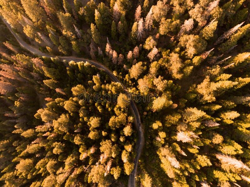 Routes et arbres photographie stock