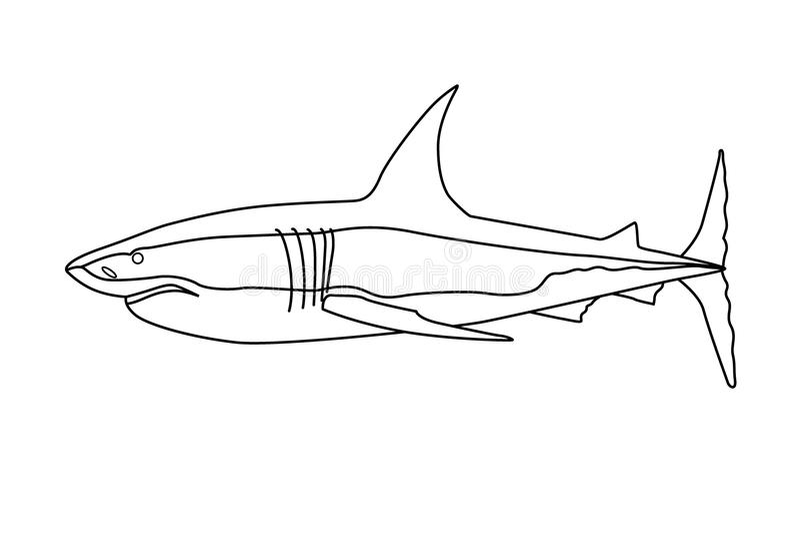 Rov- fiskhaj vektor illustrationer