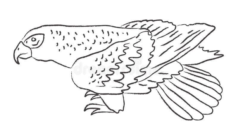 Rov- lös fågel skissa vektor vektor illustrationer