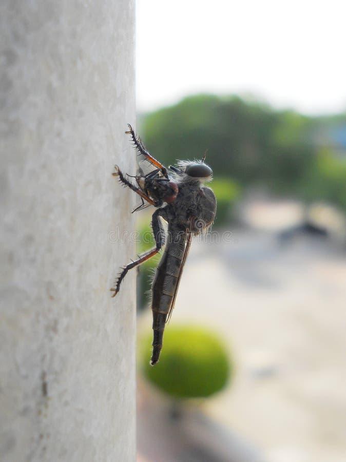 Roversvlieg voor behang Verbazende het wild macrofotografie stock foto