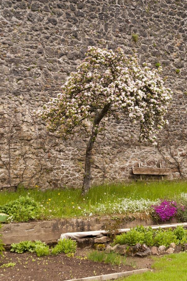 Rovina medievale di un castello fotografia stock libera da diritti