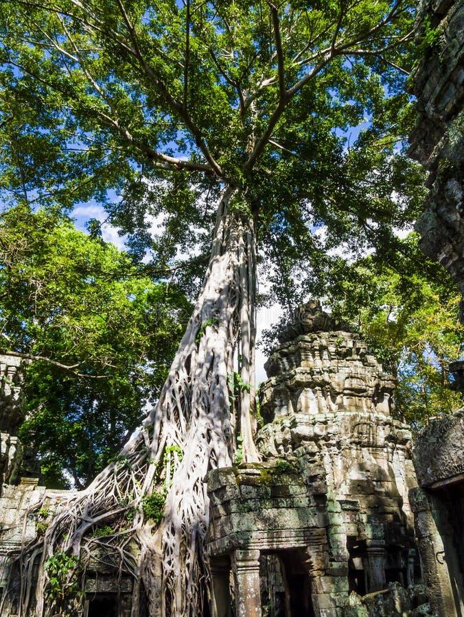 Rovine del tempio di Phrom di tum, Angkor, provincia di Siem Reap, Cambogia fotografia stock libera da diritti