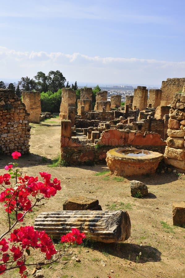 Rovine di vecchia città di Carthage, Tunisia immagini stock libere da diritti