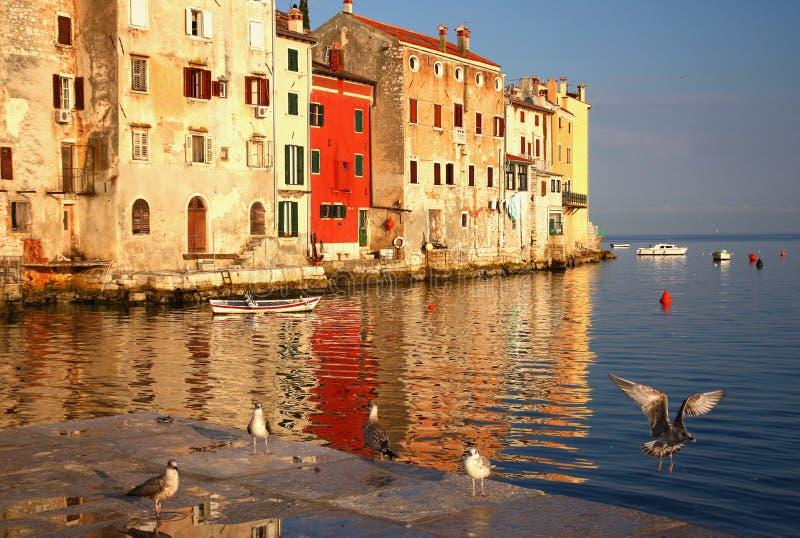 Rovinj - port with flying birds (Croatia) stock images