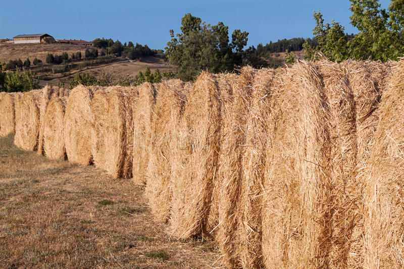 Download Row of bales of hay stock photo. Image of italy, campaign - 28962164
