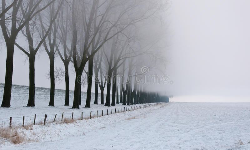 Download Row Of Bare Trees In Morning Mist Stock Image - Image of park, outdoor: 23196669