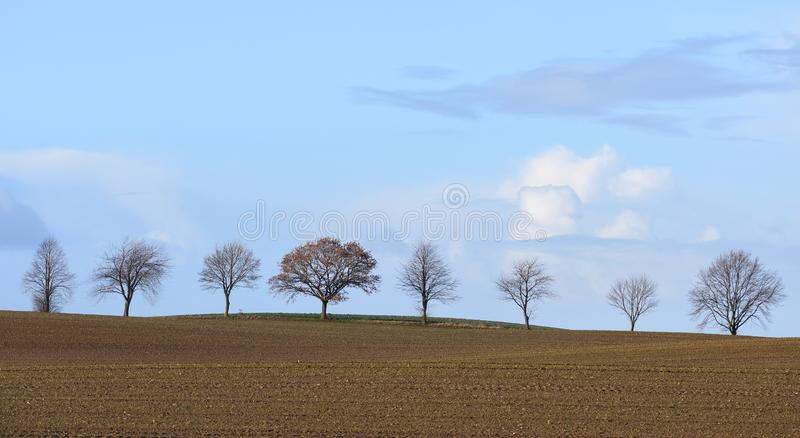 Row of bare trees on an unplanted field against a blue sky, autumn or winter landscape with copy space royalty free stock photography