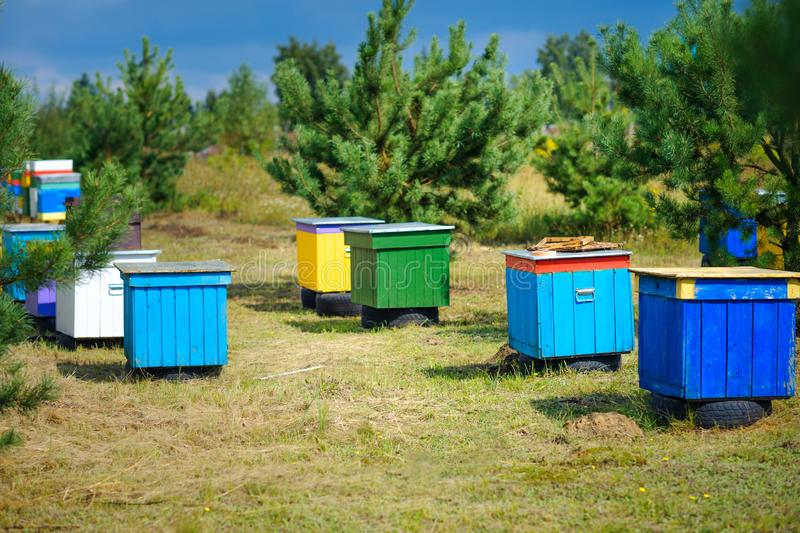 Row of bee colored hives in the forest royalty free stock photo
