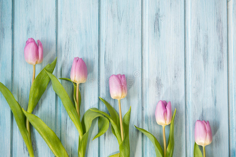 Row of bright pink tulips on blue wooden background, top view royalty free stock photos