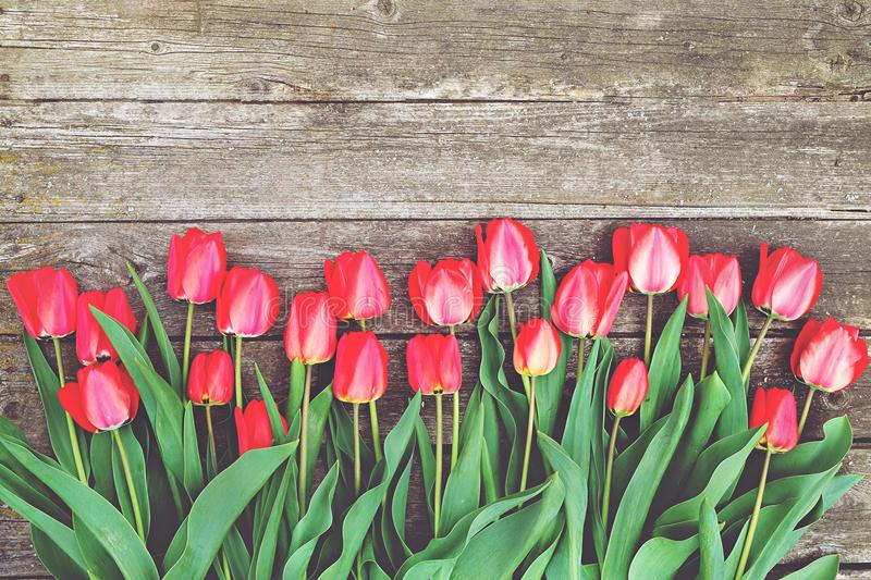 Row of bright rich red tulip flowers on stem. Wooden background with scopy text space. Welcome spring and summer. Mother`s Day ba stock images