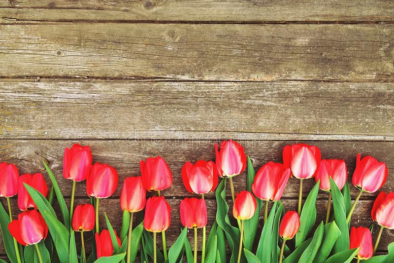 Row of bright rich red tulip flowers on stem. Wooden background with scopy text space. Welcome spring and summer. Mother`s Day ba. Hello spring concept. Vintage stock photography