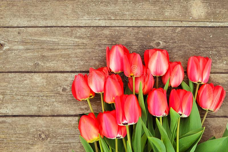 Row of bright rich red tulip flowers on stem. Wooden background with scopy text space. Welcome spring and summer. Mother`s Day ba royalty free stock photo