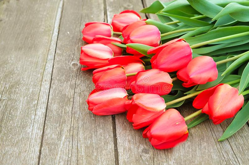Row of bright rich red tulip flowers on stem. Wooden background with scopy text space. Welcome spring and summer. Mother`s Day ba stock photos
