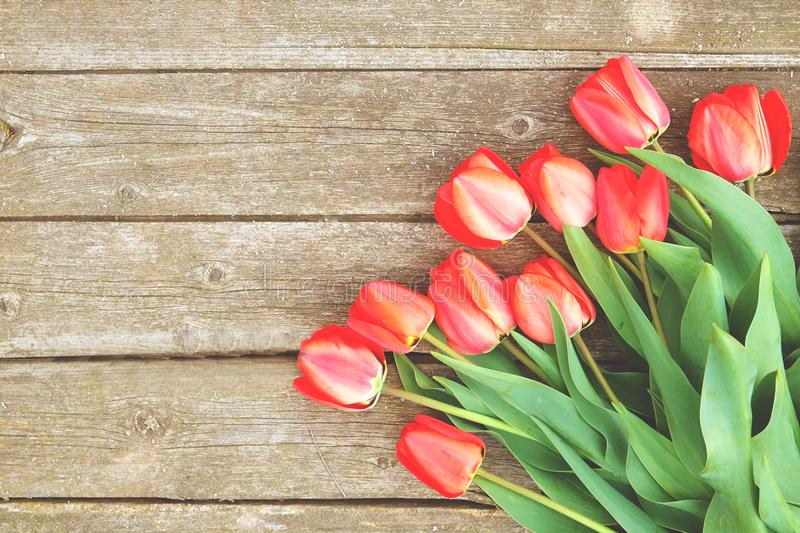 Row of bright rich red tulip flowers on stem. Wooden background with scopy text space. Welcome spring and summer. Mother`s Day ba. Hello spring concept. Vintage stock photos