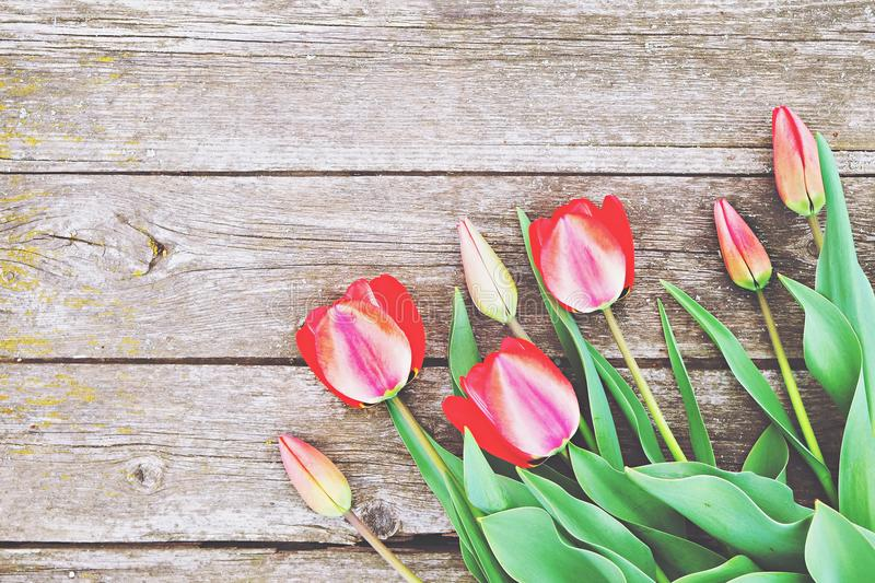 Row of bright rich red tulip flowers on stem. Wooden background with scopy text space. Welcome spring and summer. Mother`s Day ba. Hello spring concept. Vintage royalty free stock photos