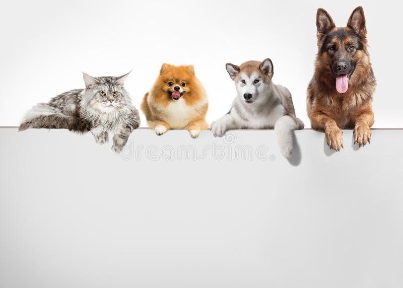 Row of cats and dogs hanging their paws over a white banner. Image sized to fit a popular social media timeline photo placeholder stock photography