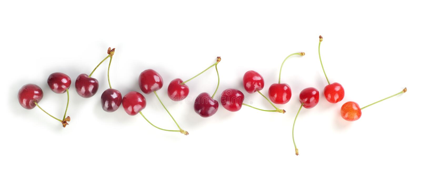 Row of cherries royalty free stock photo