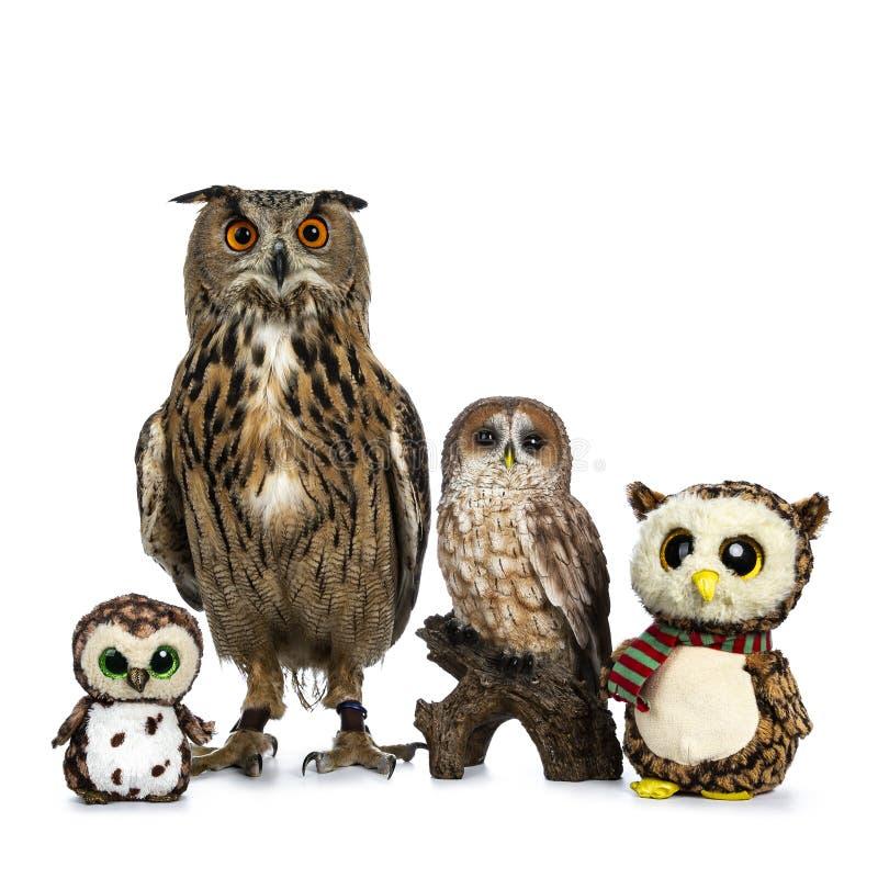 Row / collection of owls; stuffed animals, ceramic and Turkmenian Eagle owl / bubo bubo turcomanus sitting isolated on white backg royalty free stock photo