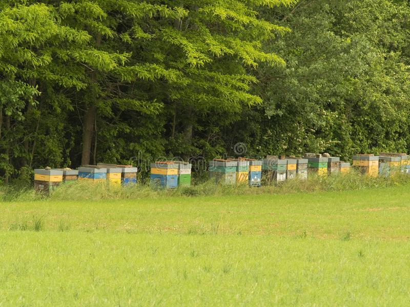 Row of colorful beehives in a field, trees in the background stock photography