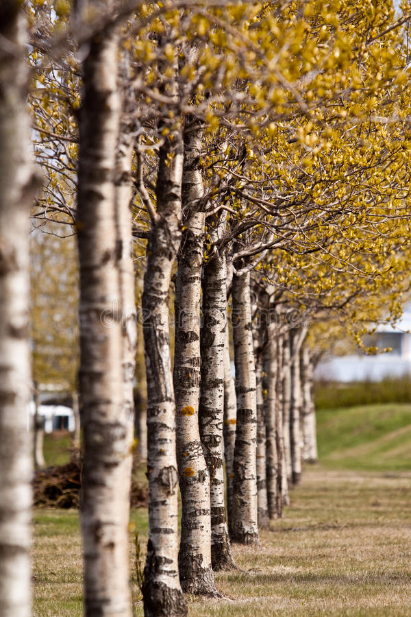 Row of colorful Spring trees royalty free stock photography